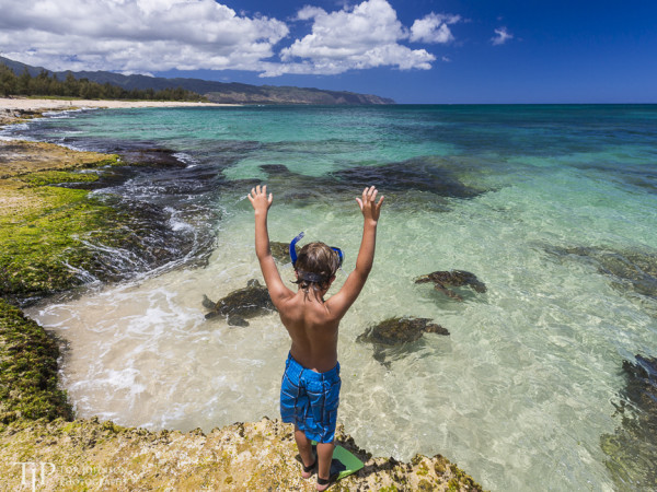 Young boy watches Green Sea Turtles on the North Shore of Oahu